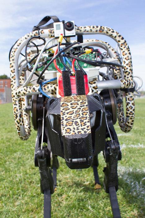 Le guépard est lâché ou comment Cheetah n'a plus de laisse   Robolution Capital   Scoop.it