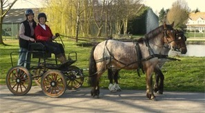 Radiographer to drive her ponies and carriage the entire length of Great Britain to raise money for Teenage Cancer Trust | Carriage Driving Radio Show | Scoop.it