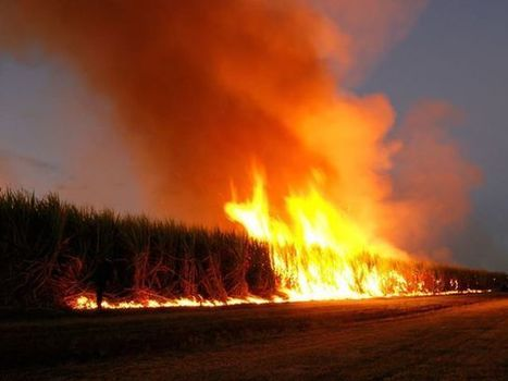 All #Monsanto #GMO Cornfields Burned Down in #Hungary #YES! | Messenger for mother Earth | Scoop.it