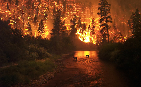 10 Unbelievable Wildfire Photos - ODDEE | Upsetment | Scoop.it