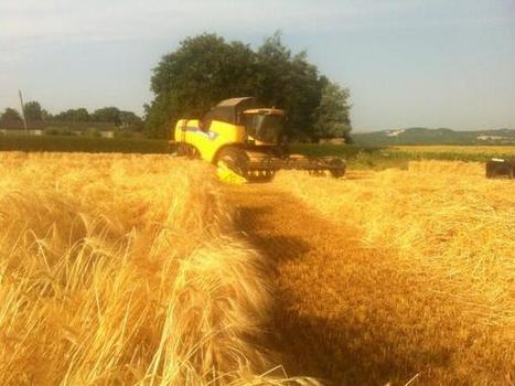PIC: Meridian barley harvested | UK #harvest13 | Scoop.it