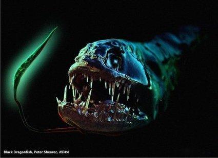 10 Horrible Deep Sea Creatures | top list | Scoop.it