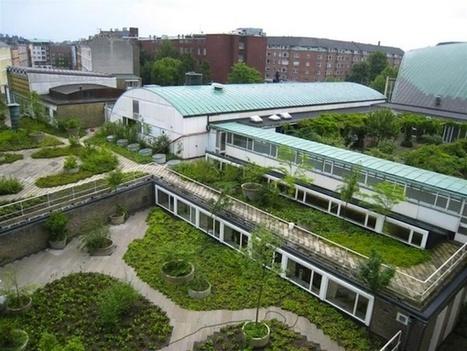 Copenhague torna obrigatório os telhados verdes - MISTURA URBANA   Revitalizar espaços públicos. Imagens e textos que ilustram condições existentes e visão de comunidade, para recriar ou criar espaços amigáveis, melhorando a qualidade de vida, saúde e vitalidade econômica.   Scoop.it