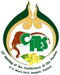 URGENT NEWS FLASH FROM CITES CONVENTION | Rhino poaching | Scoop.it