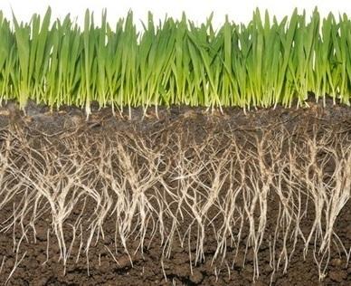 Vandana Shiva: We Are the Soil - Toward Freedom | Soil | Scoop.it
