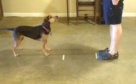 You're Too Close! Dogs and Body Pressure | Modern dog training methods and dog behavior | Scoop.it