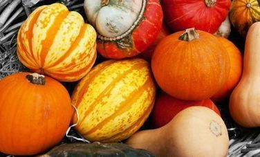 7 Reasons to Eat More Winter Squash | Nutrition Today | Scoop.it