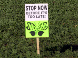 The big answer: GM crops should not be grown in Britain | GMO GM Articles Research Links | Scoop.it