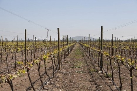 Concha y Toro has become the biggest vineyard owner in the world | Vitabella Wine Daily Gossip | Scoop.it