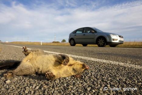 Carreteras e impactos ambientales   Carreteras   Scoop.it