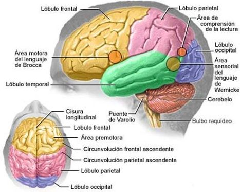 Understanding How the Brain Thinks | Edutopia | Pensamiento crítico y su integración en el Curriculum | Scoop.it
