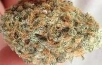 Shiva Skunk Strain Review | The legalization of marijuana | Scoop.it