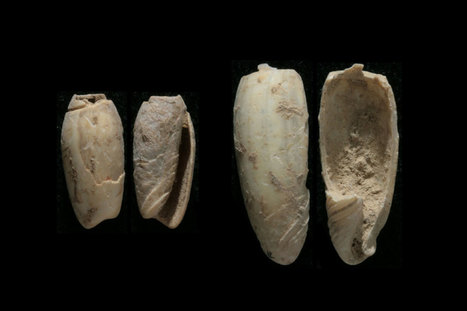 Oldest jewellery in East Asia is crafted 37,000-year-old shell | Geology | Scoop.it