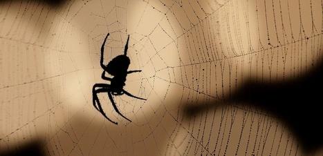 La technique des araignées Larinia mâles pour garantir leur paternité | EntomoNews | Scoop.it