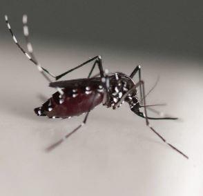 Surveiller la résistance des vecteurs aux insecticides : Lancement du réseau international WIN | EntomoNews | Scoop.it