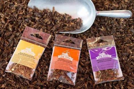 A guide to buying edible insects | Entomophagy: Edible Insects and the Future of Food | Scoop.it