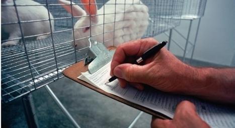 Cádiz Respira: ¡NO AL LABORATORIO DE ANIMALES ... #stopmonsanto cc @drycadiz | Animales transgénicos | Scoop.it