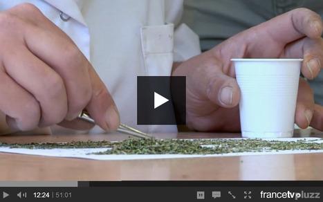 Fines herbes et grands secrets. | F&FNews | Scoop.it
