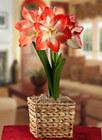 Flowerbulbs, Large Flower Bulbs, Seasonal Flower Bulbs, Perennials, Blooming Bulbs | Annie Haven | Haven Brand | Scoop.it