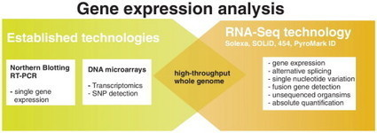 ScienceDirect.com - Current Opinion in Biotechnology - Transcriptome analysis using next-generation sequencing | Plant Genomics | Scoop.it