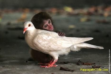 Amicizie improbabili (7 foto) - PappagalloGiallo.com   ANIMALI   Scoop.it