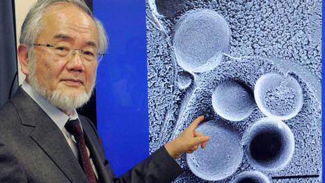 Lo que España debe aprender de los países con más premios Nobel. Noticias de Tecnología | RED y la difusión de la investigación | Scoop.it