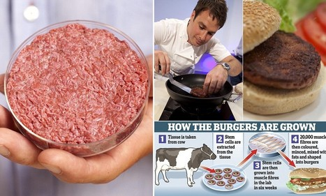 'At least it tastes of meat!': World's first test-tube artificial beef 'Googleburger' gets GOOD review as it's eaten for the first time | Test tube meat patty | Scoop.it
