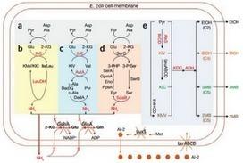 Microbiología UMH: Producción de Biofuel | Microbiología Industrial | Scoop.it
