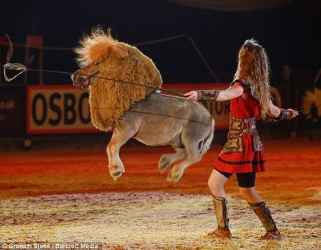 Luma the pony performs as a LION at show to the delight of thousands | Animal Science | Scoop.it