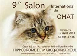 Exposition féline  à Marcq en Baroeul le 13 avril 2014 | CaniCatNews-actualité | Scoop.it