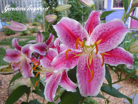 Gardens Inspired: My Gardens | Annie Haven | Haven Brand | Scoop.it
