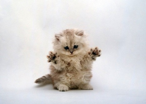 Why bad PR is killing all the fluffy kittens   Corporate Communication & Reputation   Scoop.it