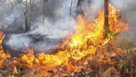 Las preocupantes consecuencias para el medio ambiente de los incendios en el norte. Noticias de Tecnología | Gestión Ambiental y Desarrollo Sostenible | Scoop.it