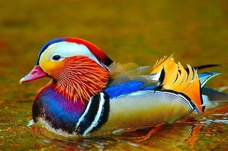 The Power Of Color:40 Superbly Colorful Bird Photos | Topics of my interest | Scoop.it