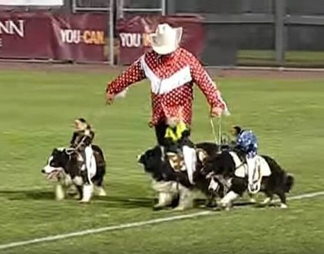 Urge Baseball Teams to Stop Cruel 'Monkey Rodeos' | Nature Animals humankind | Scoop.it