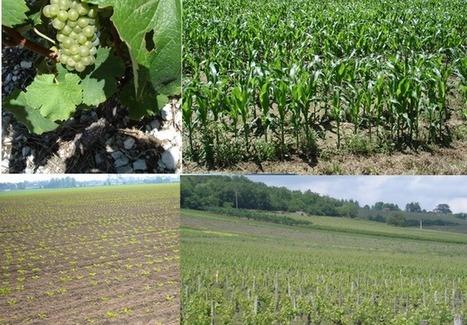 Portail   Ecophyto   Alimentation Santé Environnement   Scoop.it