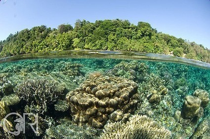 Underwater Togean Islands, Central Sulawesi, Indonesia | Mini hydro power plant | Scoop.it
