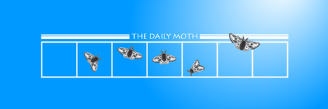 The Daily Moth | Top Stories, Deaf News, and Deaf Humor | Diverse Books and Media | Scoop.it