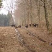 ACTÉON - Séjours de chasse et de pêche - Accueil   Tourisme et chasse   Scoop.it