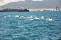 Los delfines, un tesoro natural del Estrecho deGibraltar | La Andalucía Libre | Scoop.it