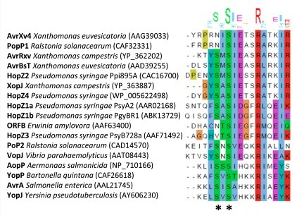 Two serine residues in Pseudomonas syringae effector HopZ1a are required for acetyltransferase activity and association with the host co-factor - Ma - 2015 - New Phytologist - Wiley Online Library | Effectors and Plant Immunity | Scoop.it