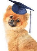 Dog Training Schools | Dog training | I love dog training | Scoop.it