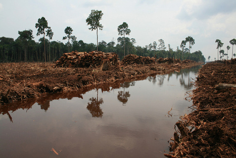Stopping global deforestation will take more than more words   Australian Forests   Scoop.it