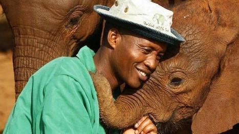 Ils sauvent 200 éléphants, retirent 140 000 pièges et emprisonnent 1000 braconniers : des héros ! | Héros et personnages | Scoop.it