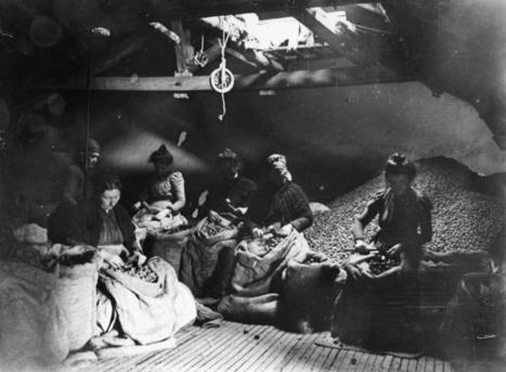 Photos anciennes: L'atelier du marchand de noix et les énoiseuses | Hotel in Dordogne Perigord | Scoop.it