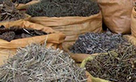 Maroc : La filièredes plantes aromatiques et médicinales aura son plan directeur de développement - Le Matin   Agriculture et Alimentation méditerranéenne durable   Scoop.it
