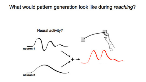 Stanford engineers discover neural rhythms drive physical movement | KurzweilAI | SwingToWin | Scoop.it