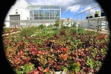 U of G Research May Help Boost Winter Survival of Green Roofs ... | Eco-friendly roofs:  green, white, and garden | Scoop.it