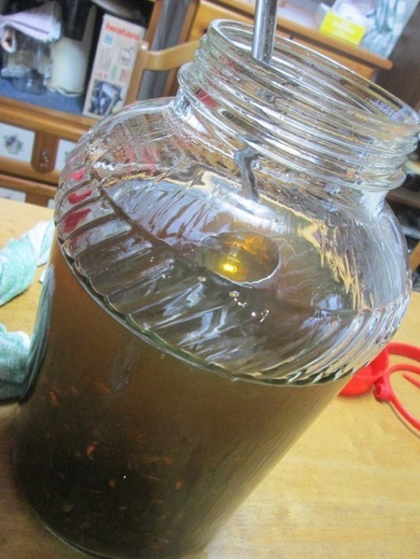 Japanese Vodka Made from Fermented Giant Hornets | Strange days indeed... | Scoop.it