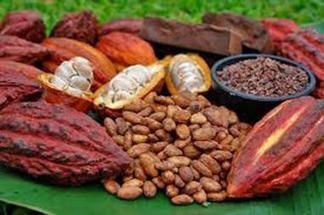 Plátano, café y cacao, lo más exportado - El Diario Ecuador   Banano   Scoop.it